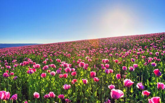 Фото бесплатно поле, пейзаж, небо