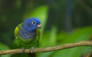 Фото бесплатно попугай, лес, деревья