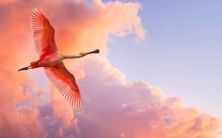 Бесплатные фото птица,крылья,нос,перья,оперение,розовый,облака