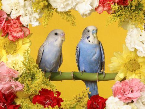 Фото бесплатно птицы, цветы, гвоздики