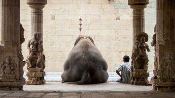 Заставки слон,хвост,спина,человек,калоны,стена,животные