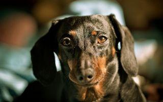 Photo free dog, bitch, male