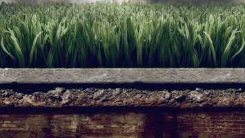 Фото бесплатно трава, зеленая, красивая