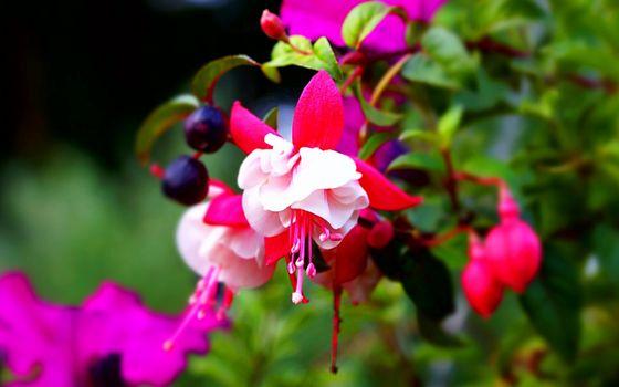 Фото бесплатно цветок, тычинка, листья