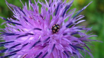 Бесплатные фото цветы, природа, разное