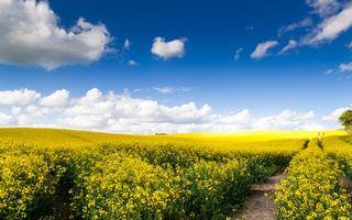 Фото бесплатно золотарник, поле, простор