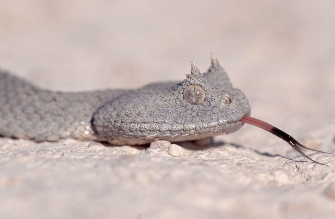 Фото бесплатно животные, змія, гадюка - на рабочий стол