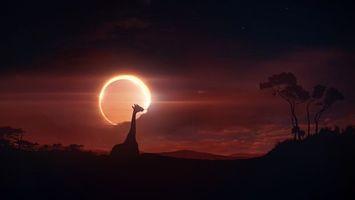 Бесплатные фото африка,жираф,солнечное,затмение,облака,силуэт,животные