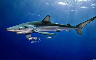 Заставки плавники, рот, акула