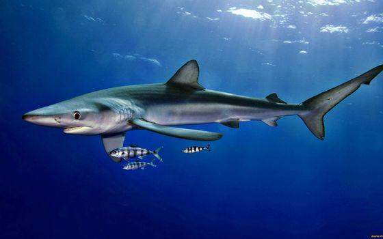 Фото бесплатно акула, морда, пасть, жабры, плавники, хвост, рыбы, океан