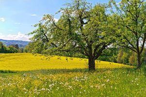 Бесплатные фото деревья,листья,крона,ветки,луг,поле,трава