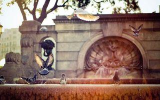 Фото бесплатно голуби, фантан, крылья