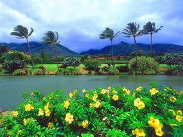 Фото бесплатно горы, небо, цветы
