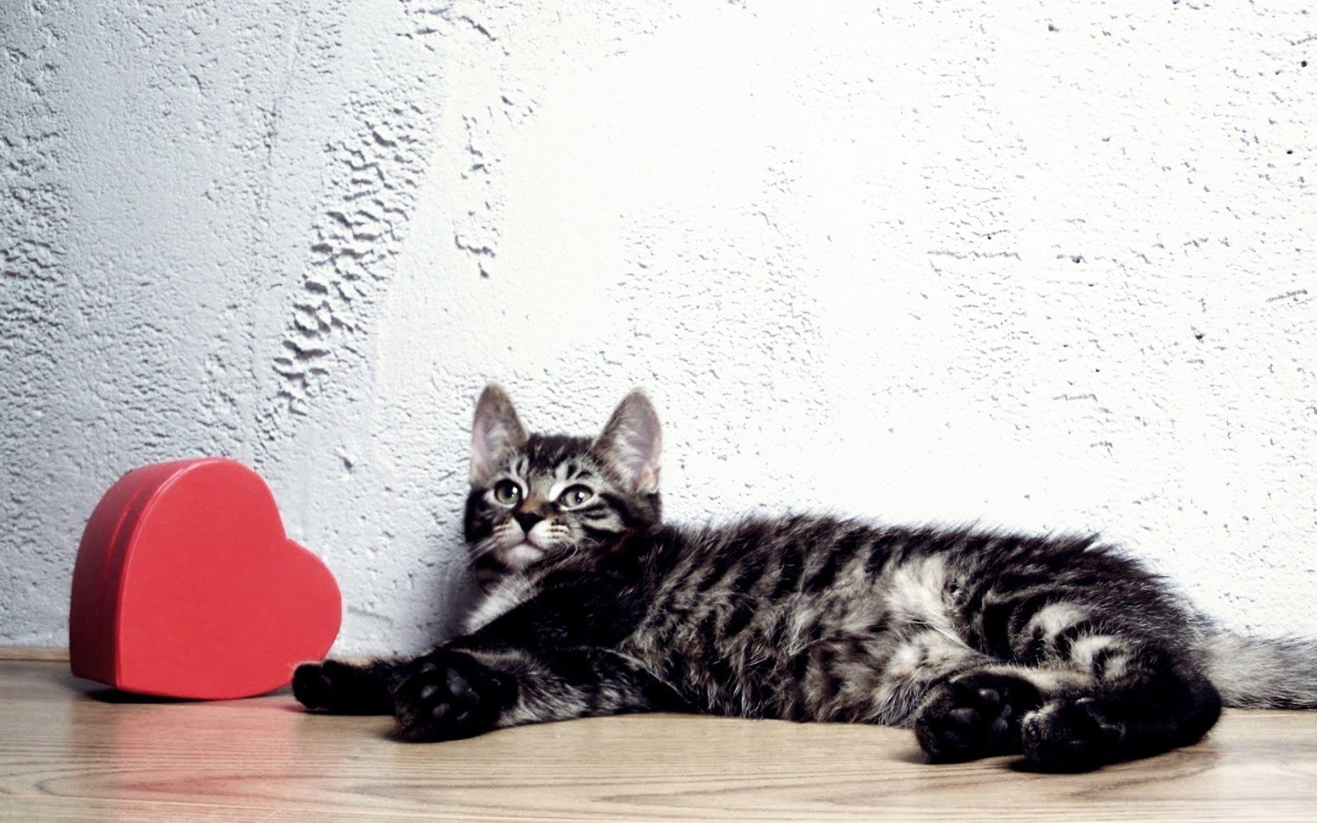 Котенок с сердцем фото