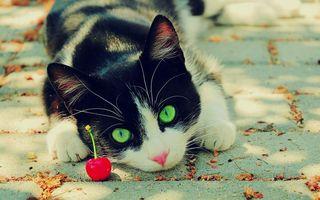 Бесплатные фото кот,котенок,вишенка,ягода,асфальт,листья,осень