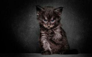 Фото бесплатно котенок, мордашка, шерсть
