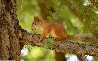 Бесплатные фото лес,дерево,иголки,кора,шерсть,грызун,животные