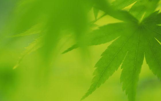 Фото бесплатно листья, зеленые, красивые, яркие, близко, размыто, природа