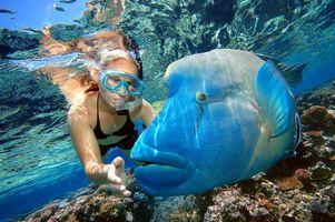 Фото бесплатно мальдивы, дайвинг, рыба