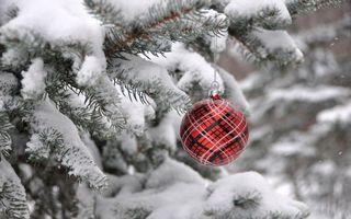 Бесплатные фото новогодний узорный шар,ветка,снег,зима,новый год