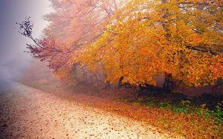 Заставки осень,деревья,листья,желтые,трава,дорога,туман