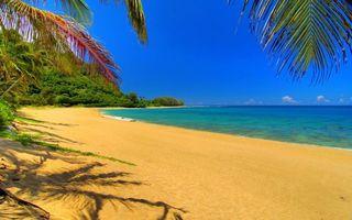 Бесплатные фото остров,берег,песок,пальмы,пляж,море,природа