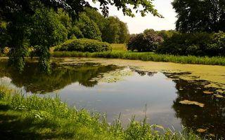 Фото бесплатно озеро, вода, отражение, берега, тина, водоросли, лес, парк, деревня, листья, лето, природа, пейзажи