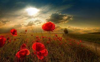 Бесплатные фото поле,маки,красные,трава,небо,облака,солнце