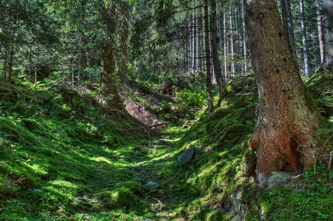 Фото бесплатно прогулка, по лесу, лес, деревья, трава, мох, лето, природа, природа