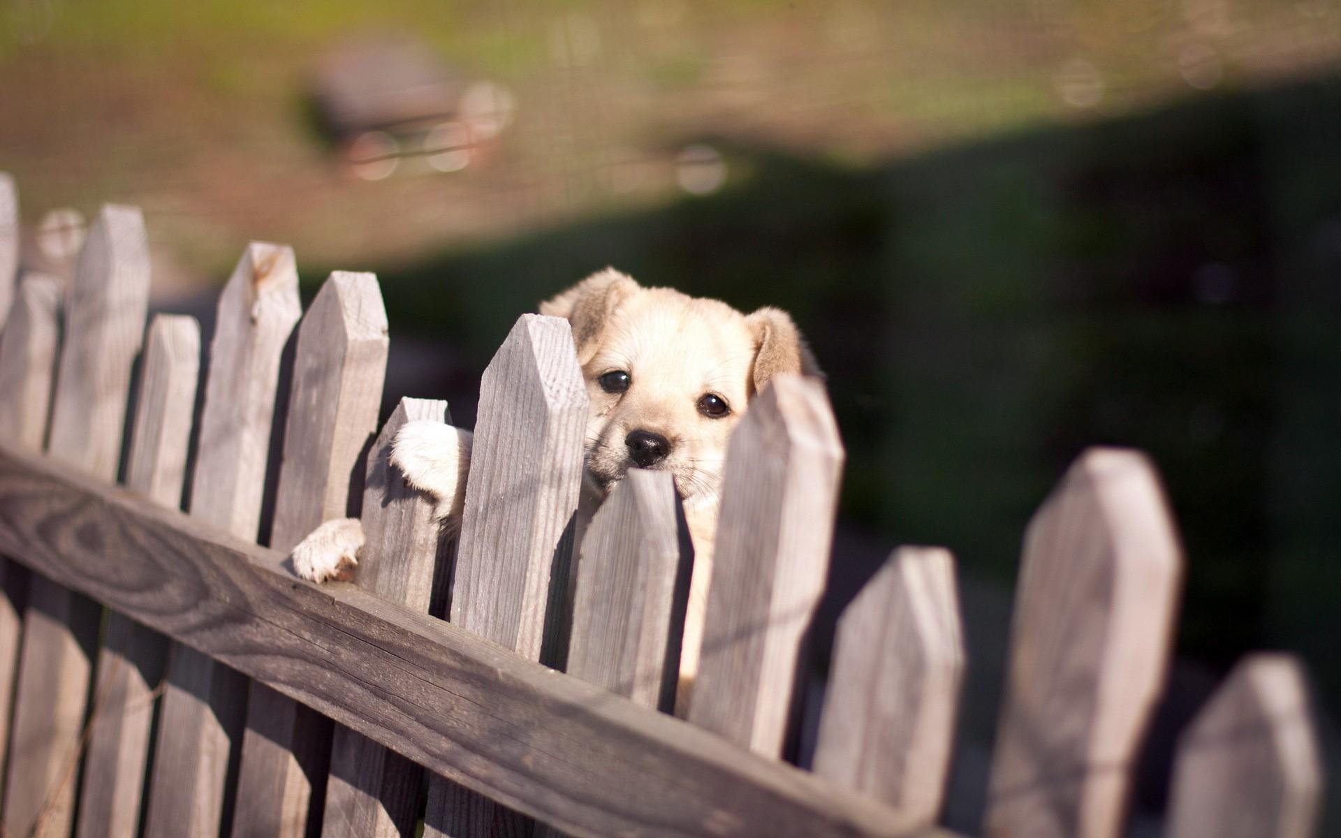 щенок, маленький, забор