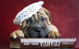 Бесплатные фото собака,очки,берет,морда,лапы,книга,юмор