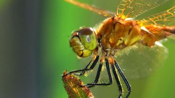 Photo free dragonfly, wings, eyes