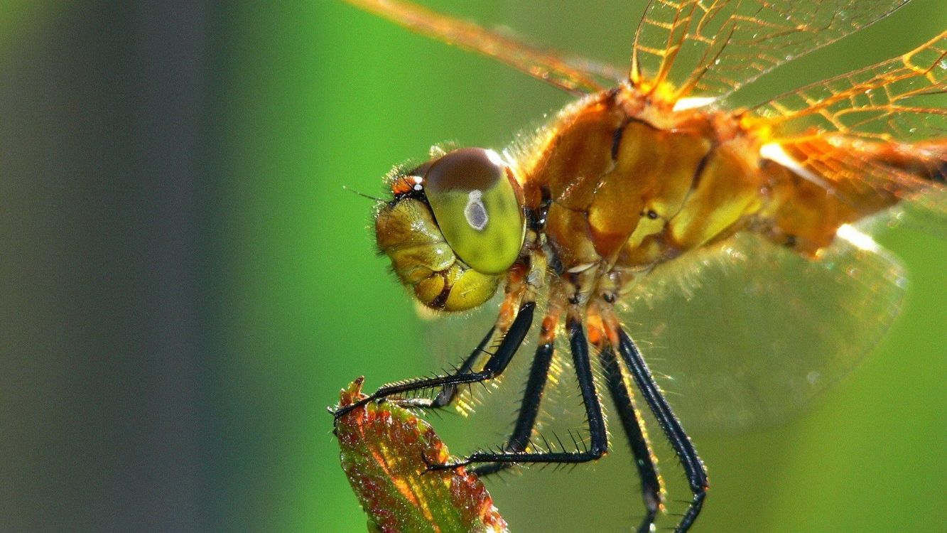 Photos for free dragonfly, wings, eyes - to the desktop