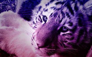 Бесплатные фото тигренок, морда, глаза, уши, лапы, шерсть, кошки