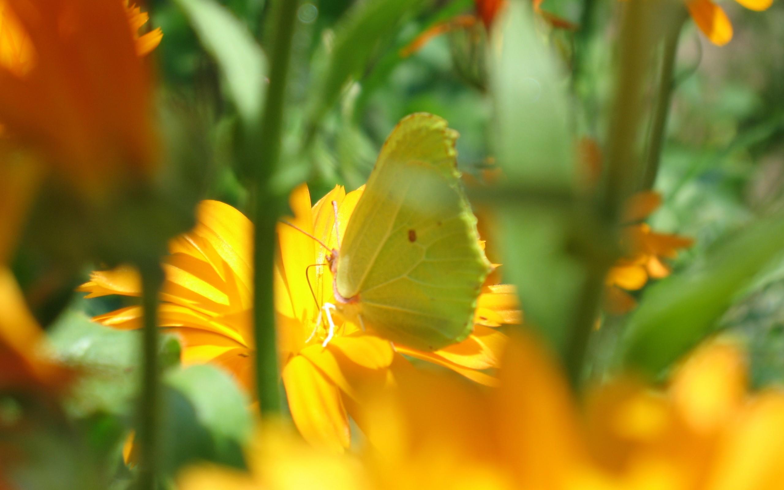 трава, цветы, бабочка