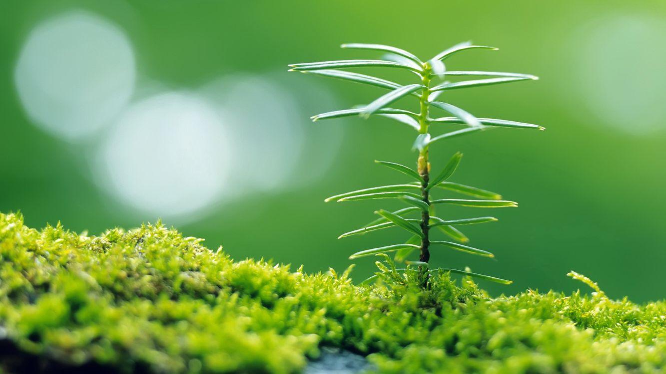 Фото бесплатно трава, мох, зелень, лес, опушка, растение, листики, ствол, блики, свет, природа, природа