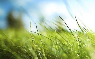 трава, поле, зелень, лето, ветер