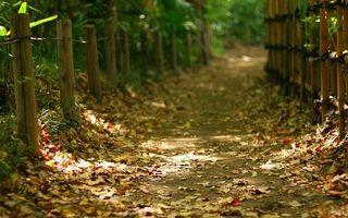 Фото бесплатно тропинка, дорожка, листва, ограда, столбики, трава, кустарник, разное