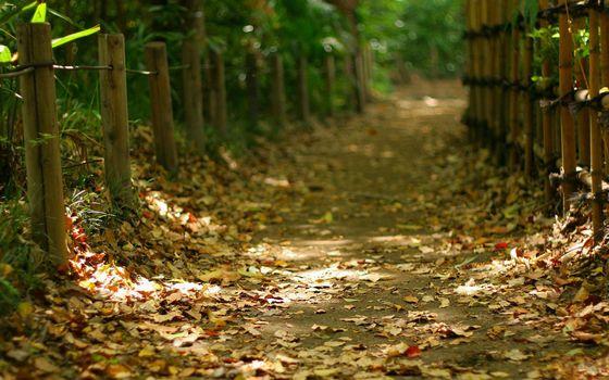 Фото бесплатно тропинка, дорожка, листва