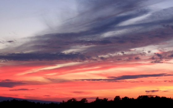Бесплатные фото закат,небо,красное,облака,тучи,деревья,верхушки,крона,природа,пейзажи