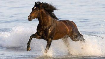 Заставки лошадь, на берегу, скачет