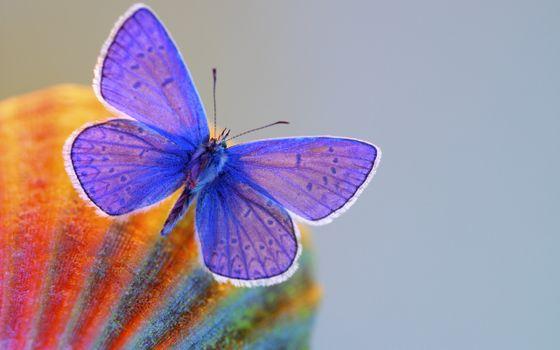 Фото бесплатно бабочка, синяя, крылья