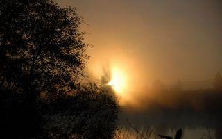 Бесплатные фото деревья,крона,небо,закат,оранжевое,солнце,лучи