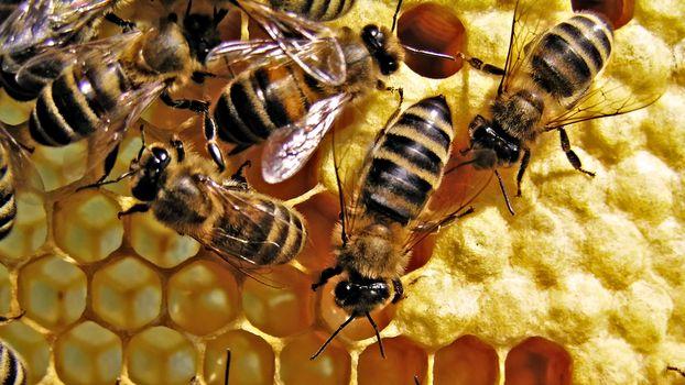 Photo free bees, honey, beehive