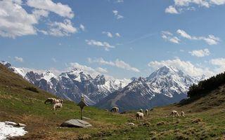 Фото бесплатно горы, овцы, поле