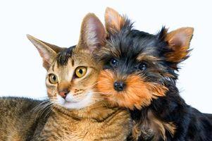 Фото бесплатно кошка, собака, друзья