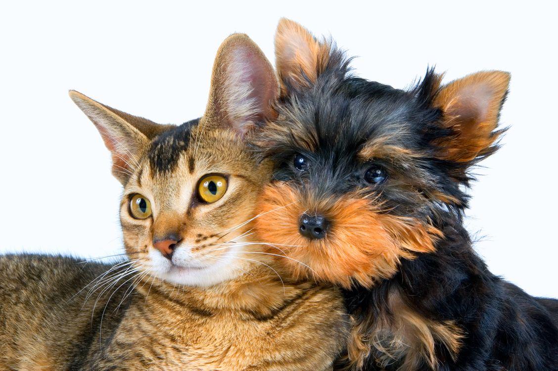Фото бесплатно кошка, собака, друзья - на рабочий стол