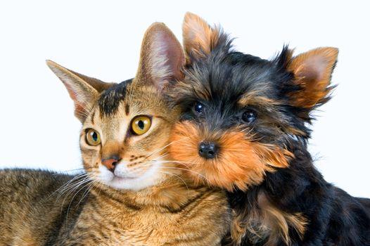 Бесплатные фото кошка,собака,друзья,животные