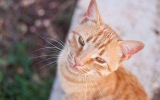 Заставки кот, рыжий, фото