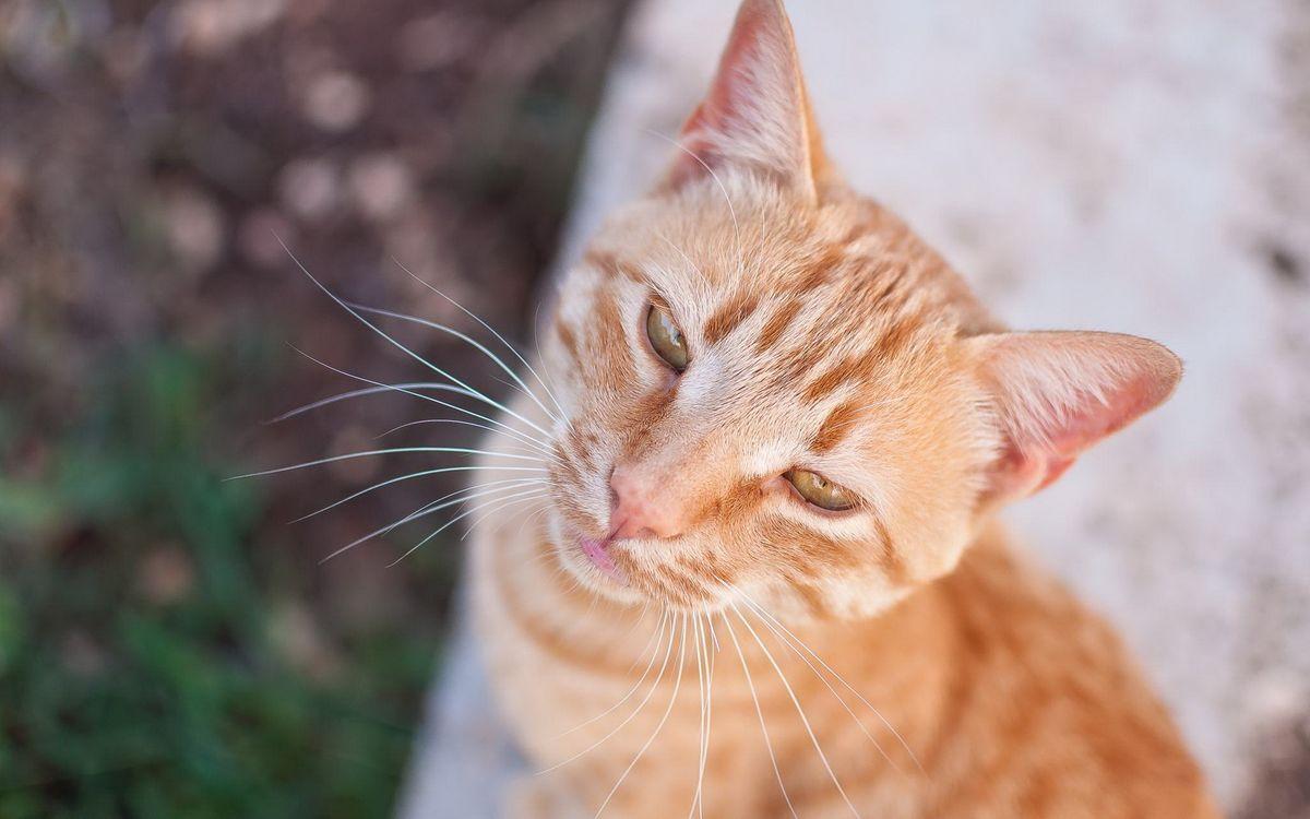 Фото бесплатно кот, рыжий, фото - на рабочий стол